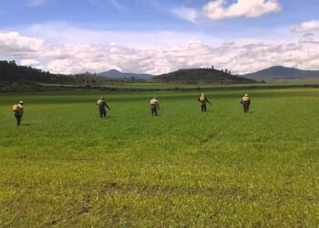 Greenpeace urge a la UE a desarrollar un plan de salida para el herbicida glifosato