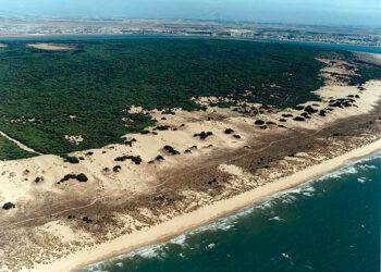 Podemos Andalucía pide la creación de un grupo de trabajo sobre el Parque Nacional de Doñana tras la denuncia de la Comisión Europea