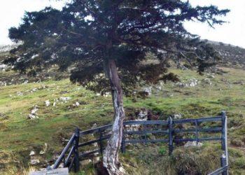 Se suman nuevas denuncias de Asturias a la Querella Argentina y se solicitará la exhumación de la fosa del Pozu Funeres