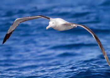La contaminación química también llega a las colonias de aves marinas antárticas