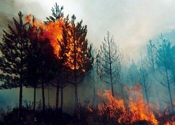 EQUO Andalucía pide que se extreme la precaución ante el peligro de incendios forestales