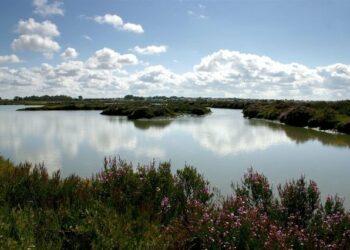 """EQUO considera una """"desfachatez"""" que el Gobierno esgrima el cambio climático para justificar la situación en Doñana"""