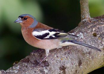 Especialistas alertan del descenso de biodiversidad en los bosques reforestados