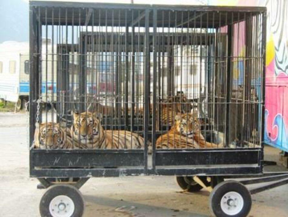 La asociación nacional de Veterinarios AVATMA pide incluir la prohibición de los circos con animales en la nueva Ley de la Comunidad de Madrid