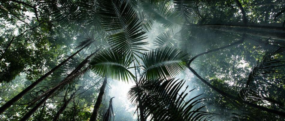 Greenpeace denuncia los graves riesgos de inundar la Amazonia con mega proyectos hidroeléctricos