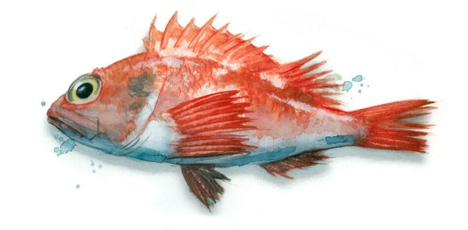 Greenpeace presenta su primera guía para identificar pescado de temporada en la que han colaborado 12 renombrados chefs