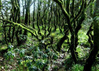 EQUO pide a la organización del 'Eurafrica Trail' que evite su paso por los Bosques de Niebla en Tarifa