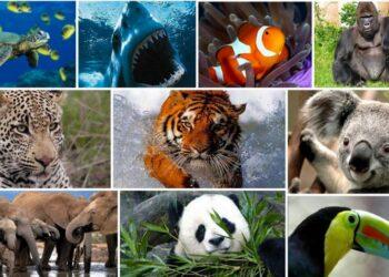 Guatemala acogerá reunión previa de foro sobre diversidad biológica