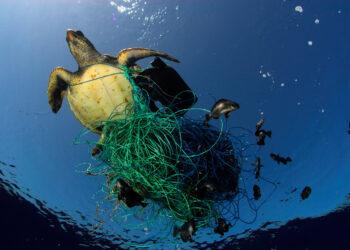 Greenpeace advierte del creciente riesgo de los plásticos en el pescado y marisco