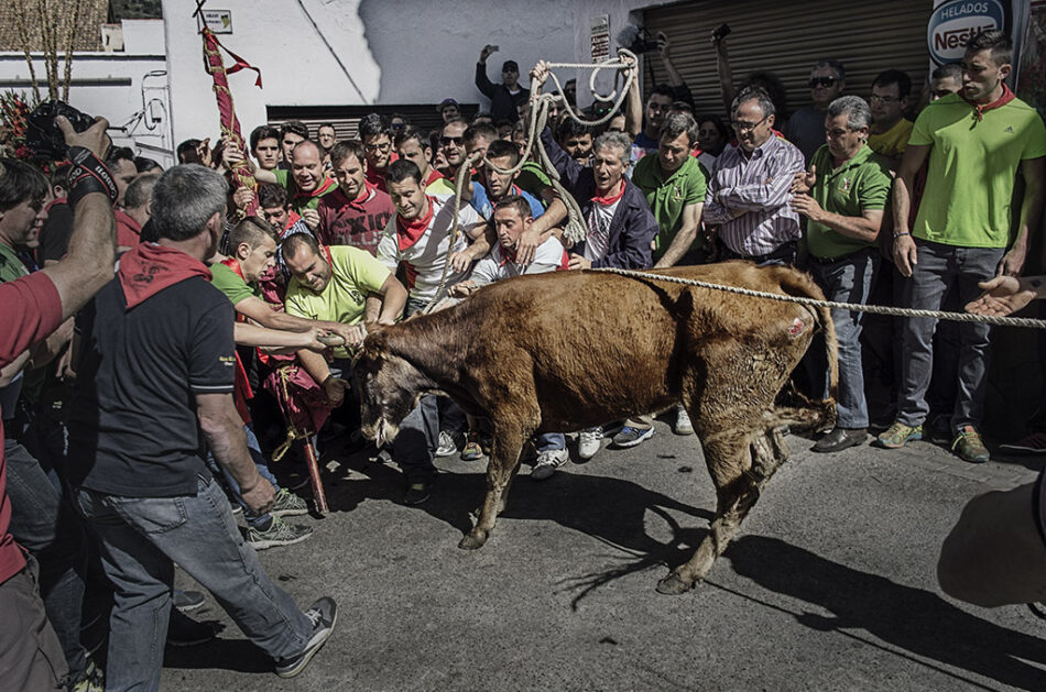 """EQUO Andalucía exige que se elimine definitivamente el maltrato animal de """"la programación de ferias y fiestas"""""""