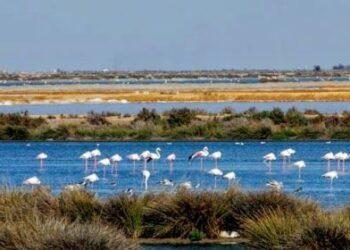 EQUO reclama un nuevo modelo agrícola para el entorno de Doñana