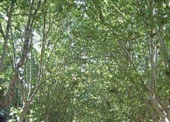Ganemos quiere plantar 20.000 árboles en Córdoba para bajar las altas temperaturas