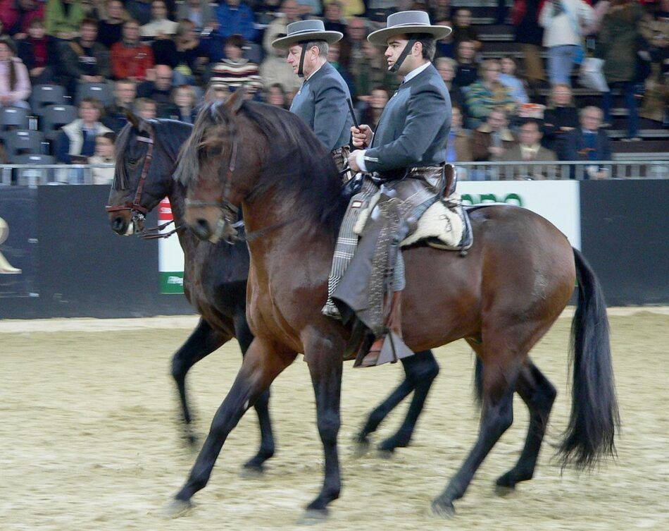 Podemos consigue el apoyo del Parlamento para que el caballo andaluz sea Patrimonio de la Humanidad