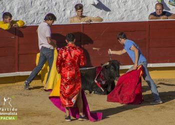 PACMA documenta las crueles becerradas de Cercedilla (Madrid)