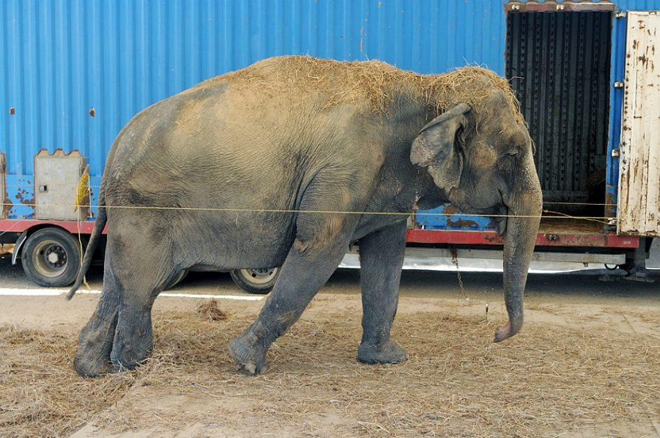 La instalación de un circo con animales genera polémica en la Costa da Morte