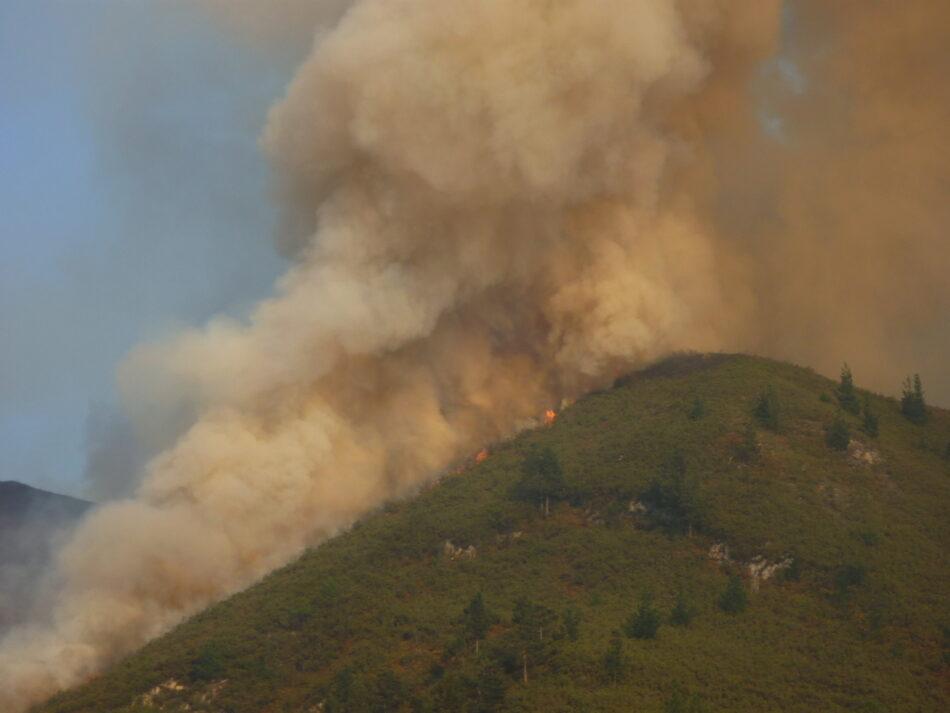 Los representantes ambientales en el Consejo Forestal y el Consejo del Fuego exigen su opinión sobre la modificación de los acotamientos en Asturias