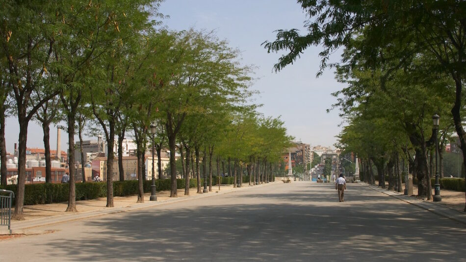 Arbolado de Madrid: antes que talar hay que explicar y acordar