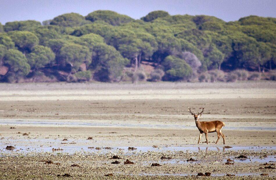 EQUO exige la paralización de los trabajos de Gas Natural en Doñana