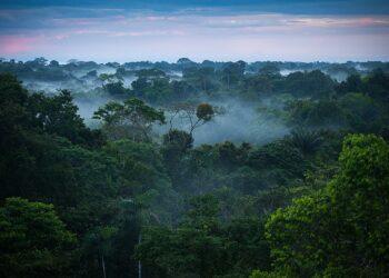 Un 10% de la naturaleza salvaje se ha perdido desde los años 90