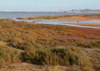 Mar Menor: preocupantes síntomas de anoxia