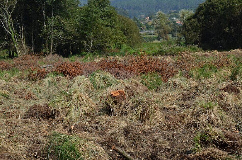 La SGHN denuncia talas abusivas en un bosque inundable del ayuntamiento coruñés de Dodro