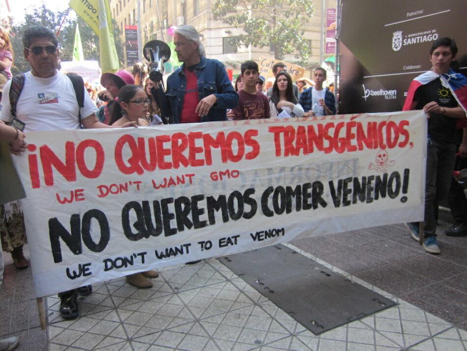 Greenpeace alerta de que la Comisión Europea podría autorizar tres transgénicos obsoletos para cultivo