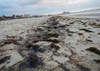 Piden el fin de vertidos de hidrocarburos en la Bahía de Algeciras