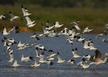 Ecologistas en Acción se suma a la Plataforma Salvemos Doñana contra el almacenamiento de gas en este espacio protegido