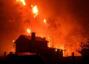 Es imprescindible acotar al pastoreo las zonas incendiadas según un informe técnico de la Universidad Politécnica de Madrid