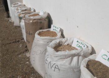 Campaña de apoyo: «Somonte vs. Monsanto. Semillas de dignidad por la soberanía alimentaria»