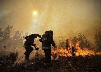 En Chile, el negocio forestal detrás de los incendios