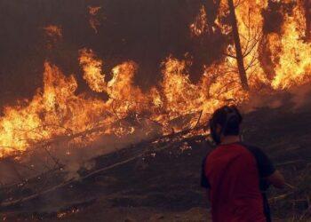 Chile vive el peor desastre forestal de su historia