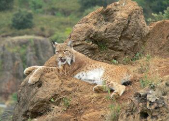 «El envenenamiento de fauna protegida sigue siendo una amenaza de primera magnitud para la biodiversidad»