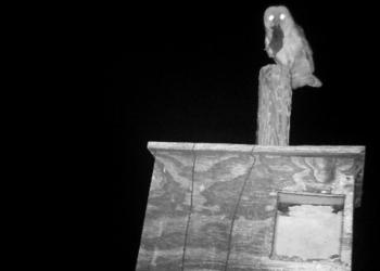 GREFA ha colocado ya 2.000 nidales en Castilla y León para aves rapaces que cazan topillos