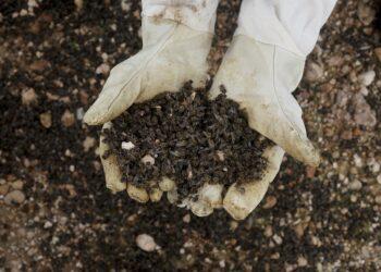 Millones de abejas mueren en masa en Murcia