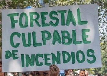 Nación Mapuche: PPM y comunidades Mapuche de Lebu llaman a Pueblo chileno a rebelarse contra empresariado forestal