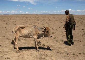 Hambruna en Somalia, Etiopía y Kenia por sequía