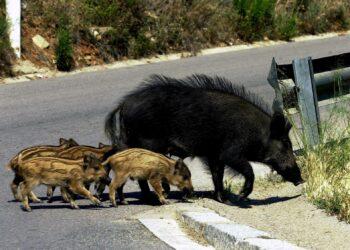Se recrudecen las agresiones y las amenazas a los defensores de la vida silvestre y de la naturaleza