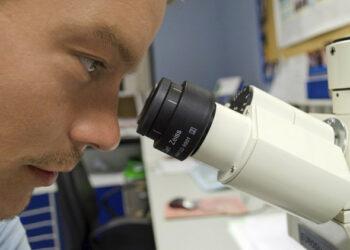 Hallan lo que podrían ser los primeros organismos multicelulares de la Tierra