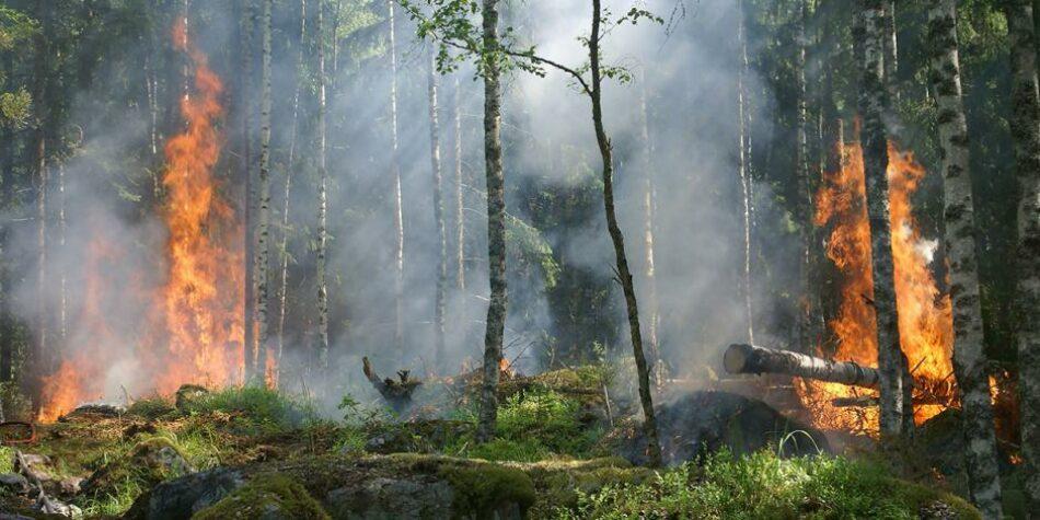 CCOO apoya las iniciativas parlamentarias sobre agentes forestales y medioambientales