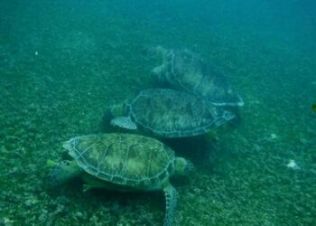 Las organizaciones ecologistas rechazan tajantemente la propuesta del PP de modificar la ley de biodiversidad