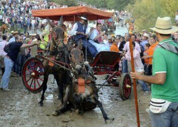 EQUO pregunta en el Congreso por el maltrato animal en El Rocío