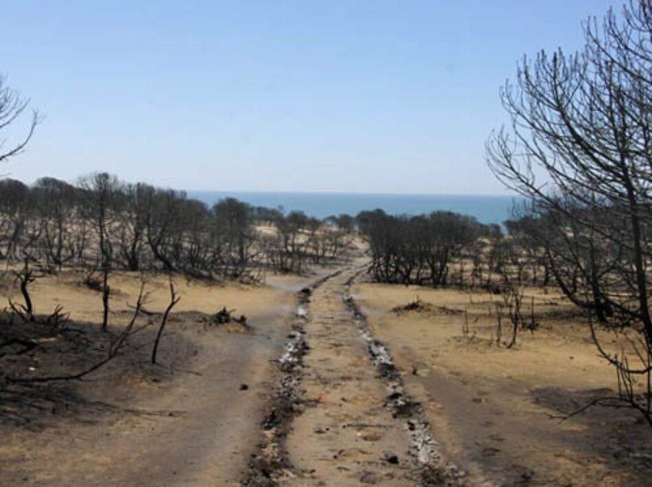 Podemos pide a la Comisión Europea que investigue si Doñana cumplía con las directivas europeas de prevención y cuidados de los espacios naturales