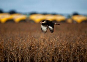 El agronegocio de la soja en América Latina