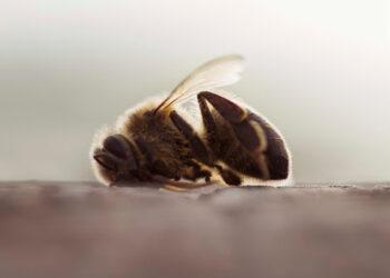 Primer estudio de campo paneuropeo confirma que los insecticidas neonicotinoides dañan a las abejas