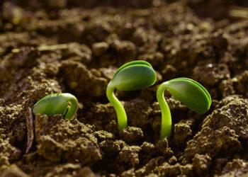Agroecología frente a la agricultura industrial
