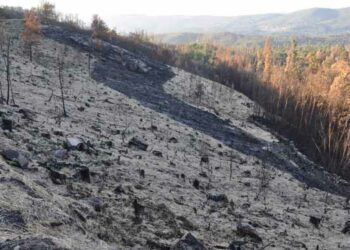 Una Proposición de Ley con medidas urgentes para conservar los suelos forestales afectados por incendios