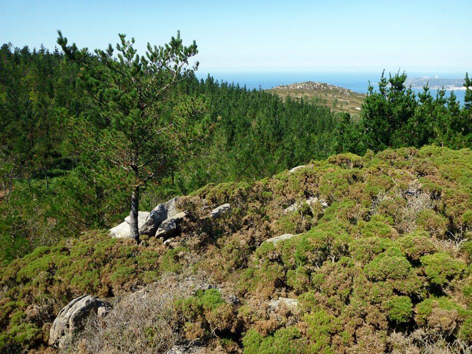 Gas Natural Fenosa dedicó sólo tres días a evaluar sobre el terreno la biodiversidad de la zona del proyecto eólico Mouriños