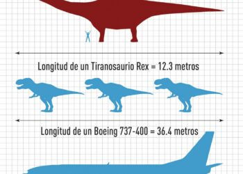 El dinosaurio hallado en Argentina es el mayor del que se tiene constancia