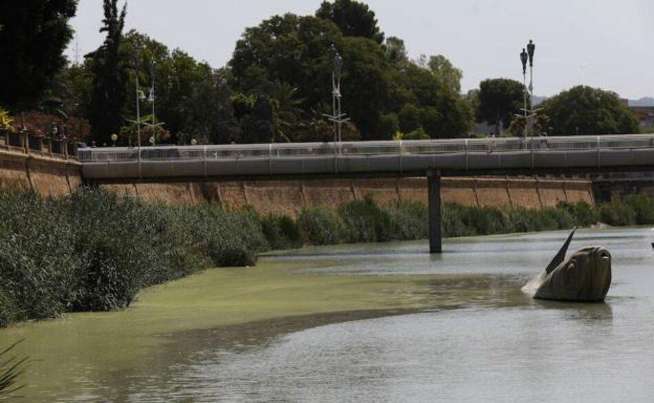 Cambiemos Murcia achaca el color verde del río a su desnaturalización a su paso por la ciudad de Murcia